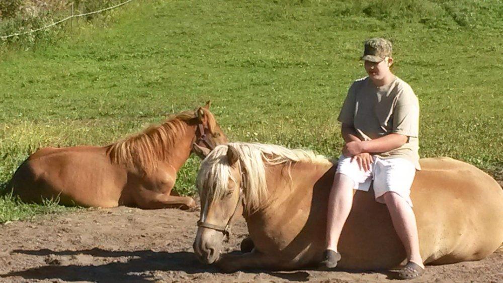 Siperin Kennelin hevoset